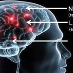 Qué es el Neuromarketing, objetivos, técnicas y ejemplos de Neuromercadotecnia